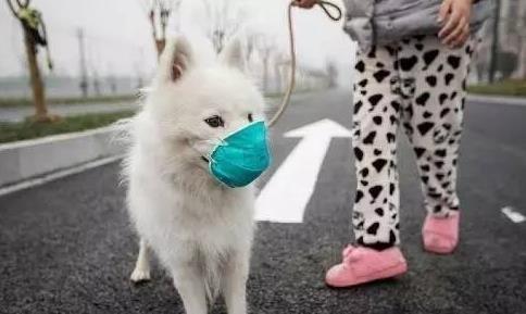 雾霾天气对狗狗有哪些害处?